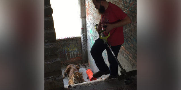 Detroit Man Fails To Scare Tiger From Abandoned Warehouse With Garden Tool UNILAD 13899610413365521117
