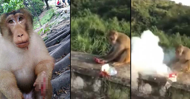 Awful Moment A*sehole Throws Firecracker To Hungry Monkey UNILAD 1410