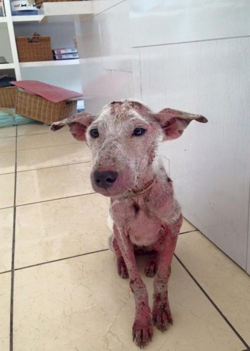 This Desperate Dog Jumped Into Somebodys Car And Her Life Was Never The Same Again UNILAD 58