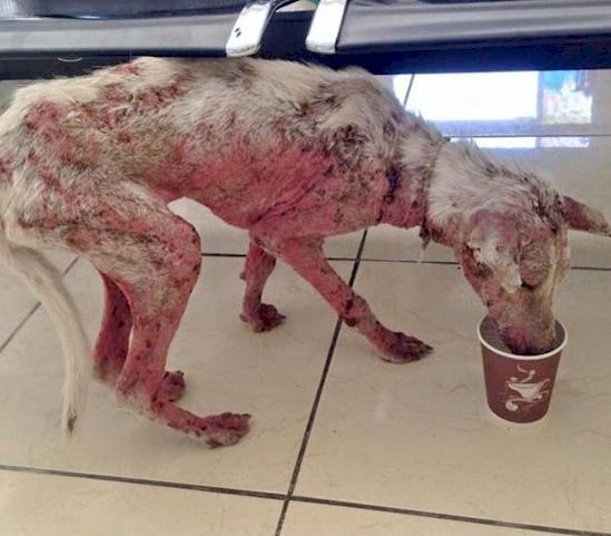 This Desperate Dog Jumped Into Somebodys Car And Her Life Was Never The Same Again UNILAD 671