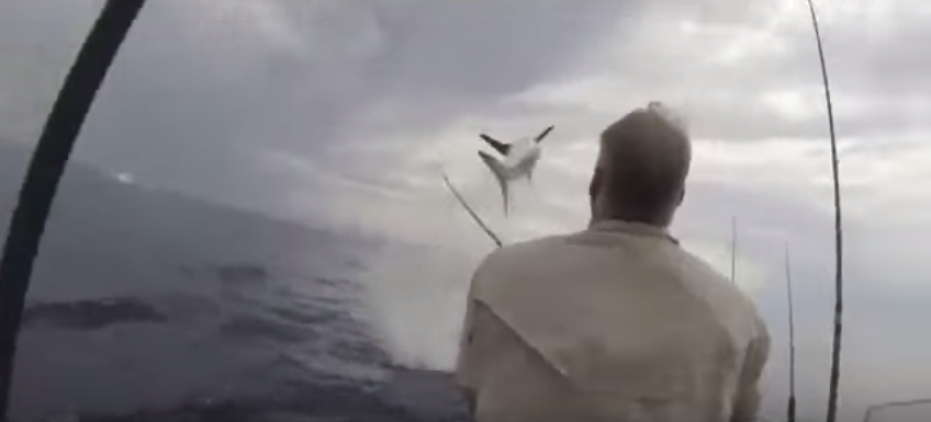 Moment Shark Jumps 12 Feet Out Of Water, Terrifying Fisherman UNILAD IvtK15FquR