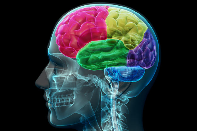 This Is What Happens To Your Brain When Youre Watching Porn UNILAD Pint of Science 2
