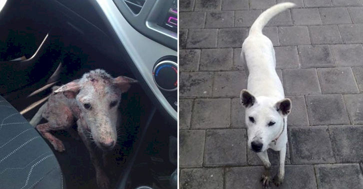 This Desperate Dog Jumped Into Somebodys Car And Her Life Was Never The Same Again UNILAD TN183