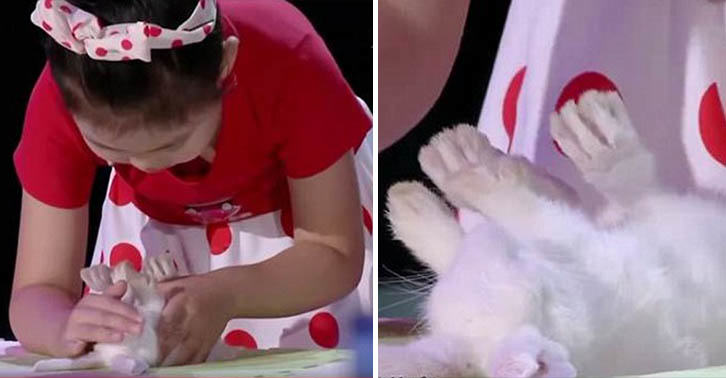 Video Shows A Five Year Old Girl Hypnotising Animals With A Stroke Of Her Hand UNILAD hypnotism animals 26