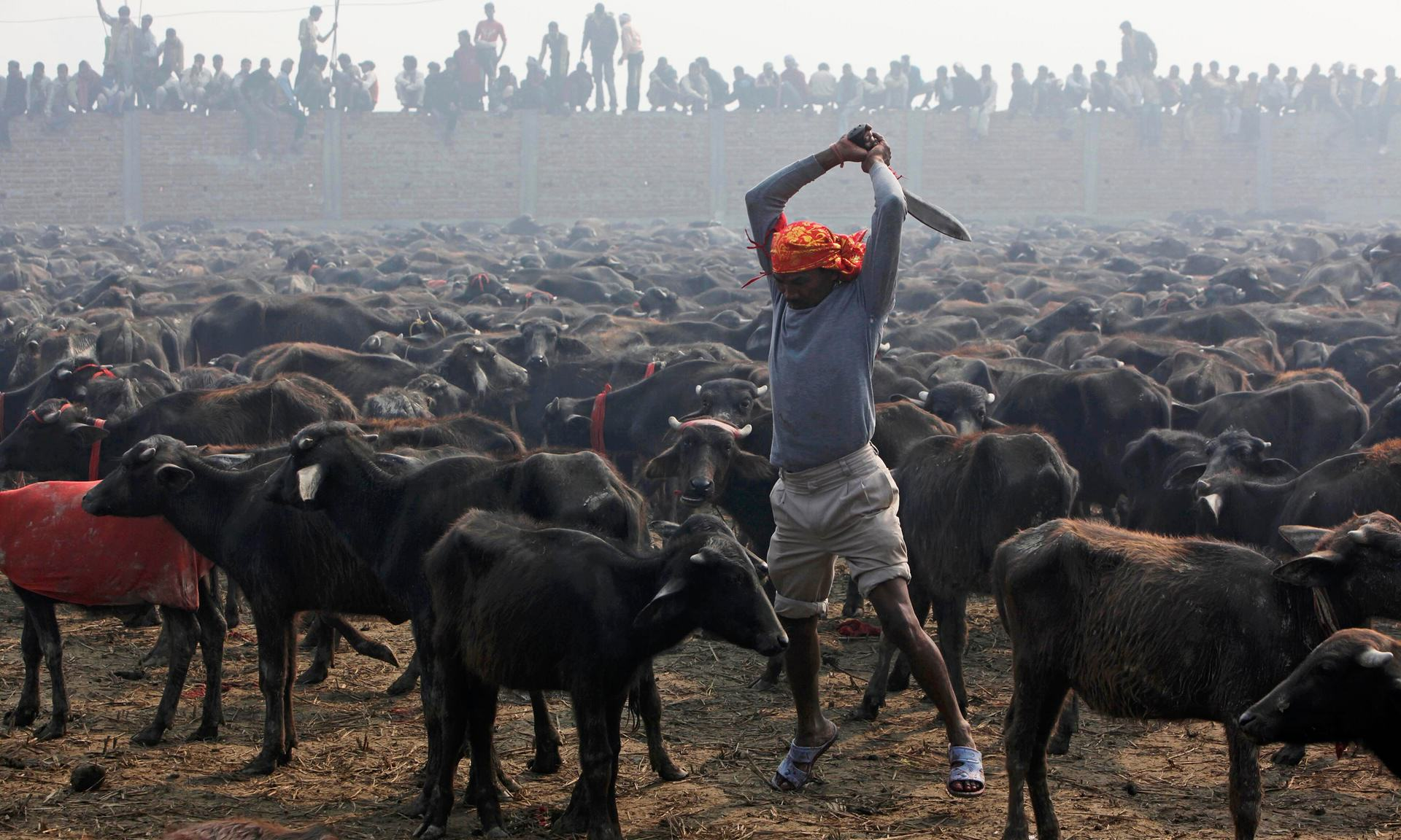 Nepal Religious Festival Bans Slaughter Of Half A Million Animals UNILAD nepal festival 24