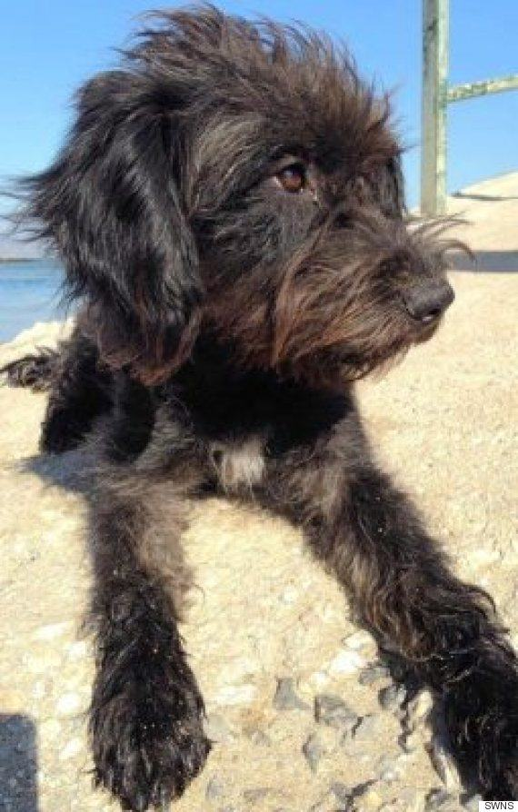 Woman Files Back To Greece To Rescue Dog Who Saved Her From Attack UNILAD pepper4