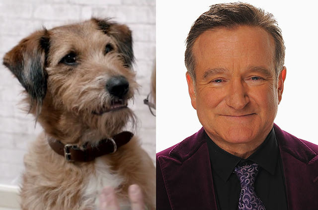 Ten Facts You Probably Didnt Know About The Late, Great, Robin Williams UNILAD rwaa7