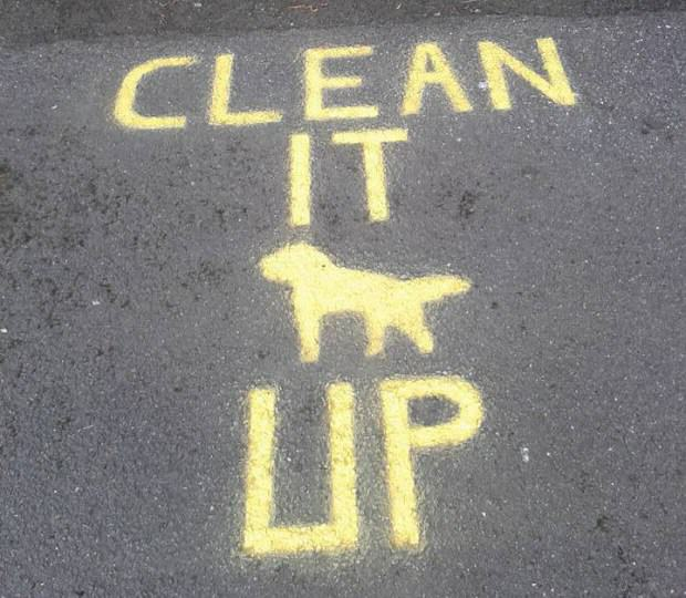 Poo Police   This Bloke Secretly Films Dog Owners That Dont Pick Up After Their Pooch ljNlV3Fmd