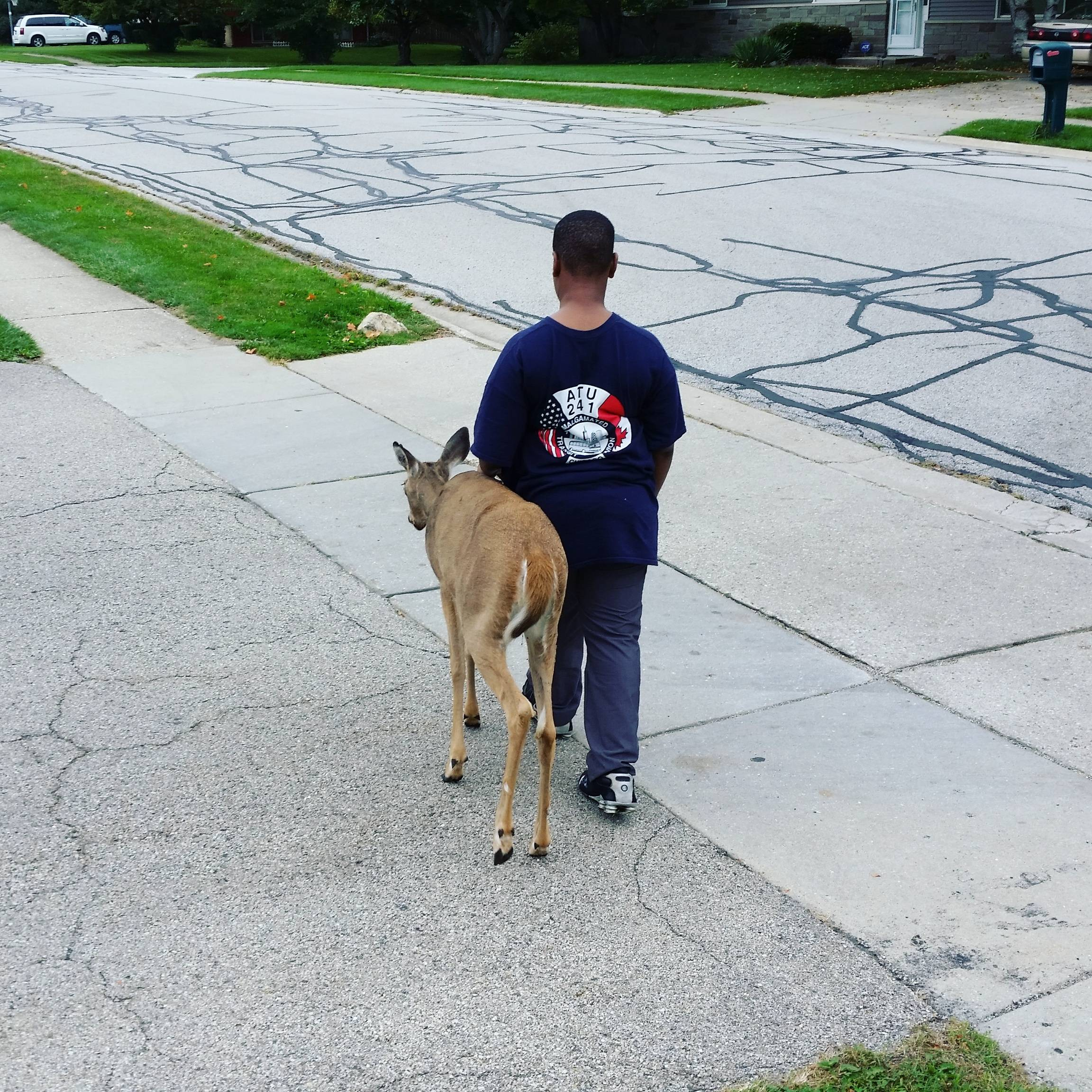 This Heartwarming Photo Of A Boy Helping A Blind Deer To Eat Has Gone Viral 1SAeoTU