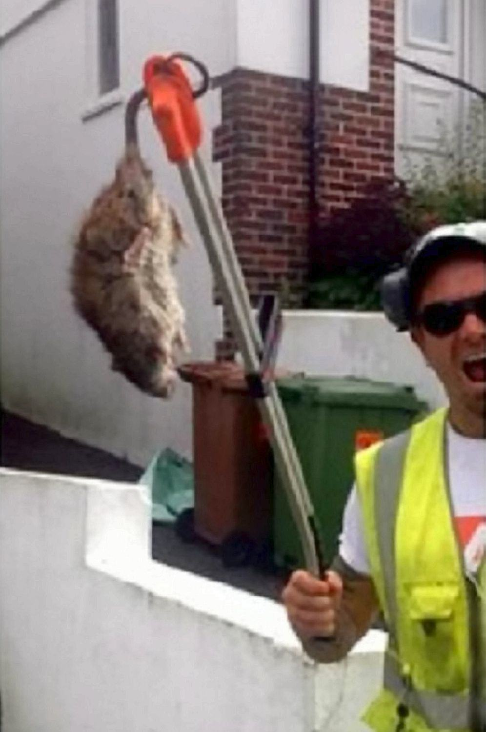 Rat The Size Of A Dog Chases Binman Down The Street In Plymouth Ben LandricombeSWNS