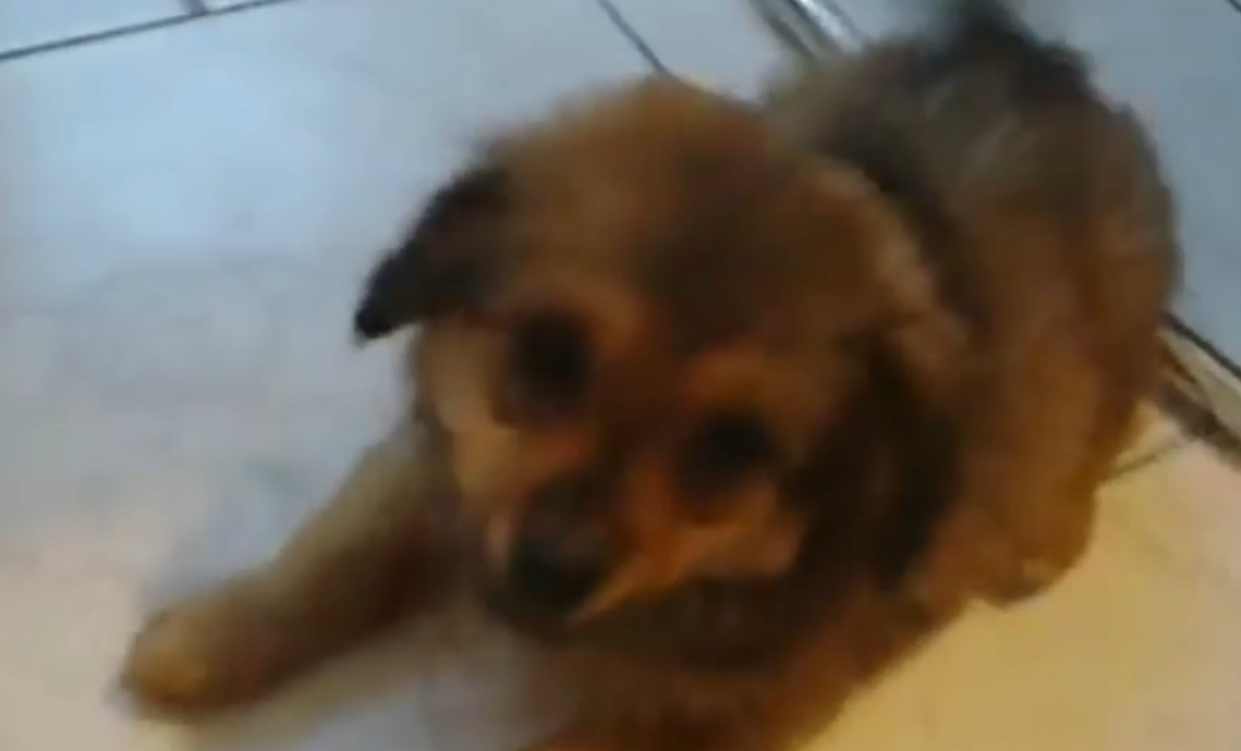 Animal Rights Activists Take Dog Away From Weeping Homeless Owner Screen Shot 2015 09 26 at 02.06.15