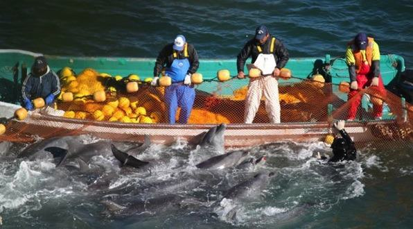Heartbreaking Moment A Dolphin Throws Itself Onto Rocks To Escape Hunters UNILAD 0121taiji044
