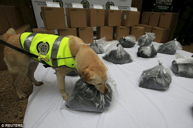 Sniffer Dog Finds A Metric Ton Of Cocaine On A Plane Heading To Mexico UNILAD 22