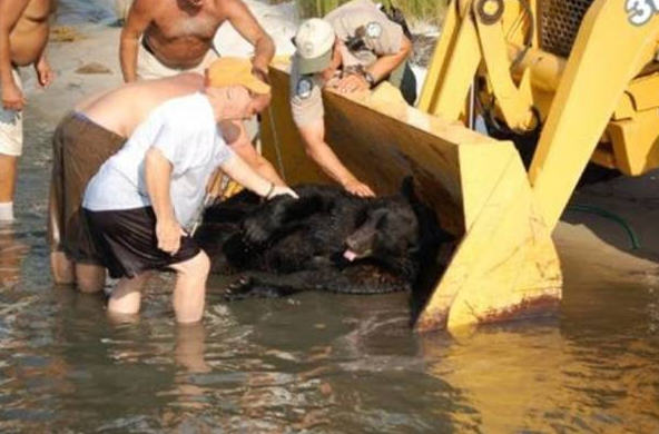 Amazing Story Of Brave Man Who Saved The Life Of A Black Bear UNILAD 62