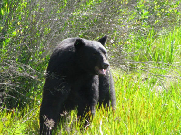 Amazing Story Of Brave Man Who Saved The Life Of A Black Bear UNILAD 85