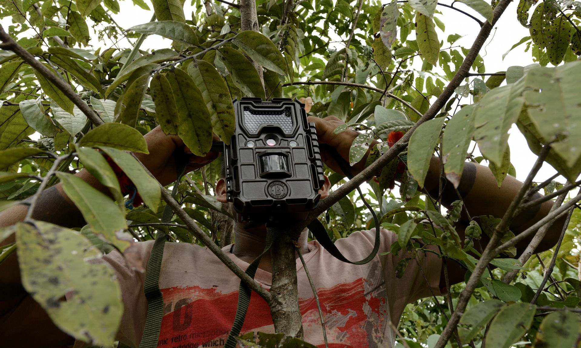 A Ka'apor Indian sets up a trap camera in an area used by illegal loggers. Photograph- Lunae Parracho:Greenpeace