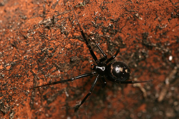 Ten Spiders Coming To Live With You This Autumn UNILAD Cupboard Spiders getty8