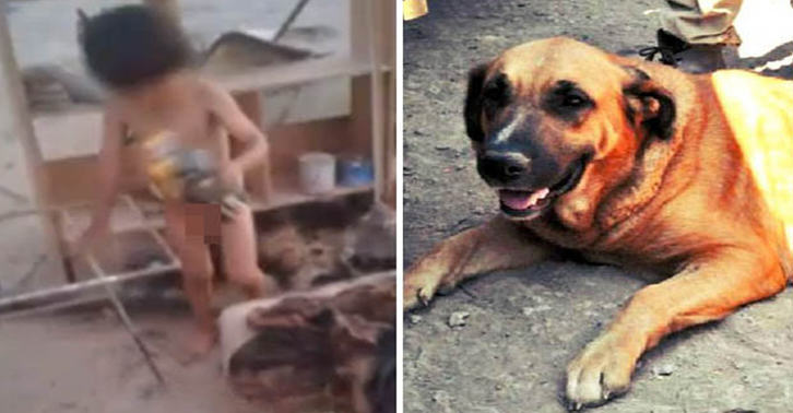 Toddler Taken Into Care After Being Found Breastfeeding From A Dog UNILAD TN15