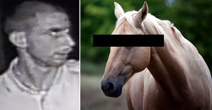 Married Father Of Three Pleads Guilty To Sexually Assaulting A Horse UNILAD TN176