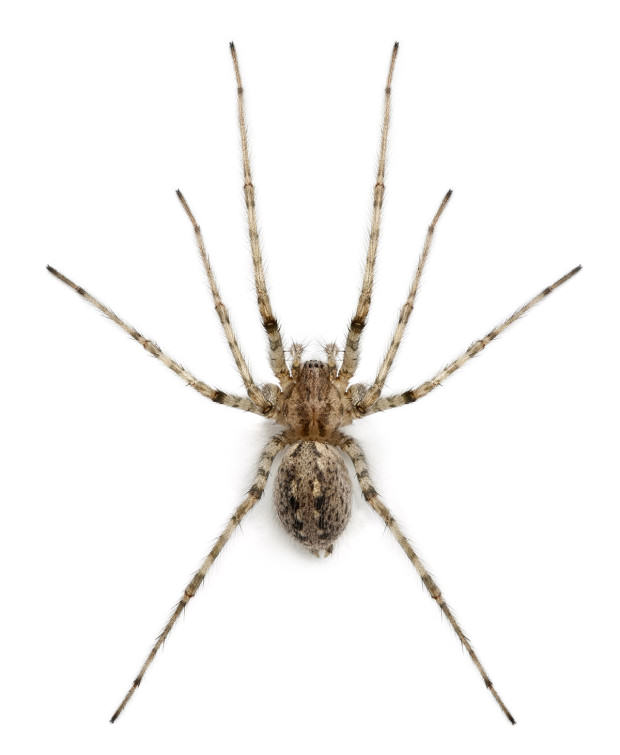 Ten Spiders Coming To Live With You This Autumn UNILAD caridnal gtty5