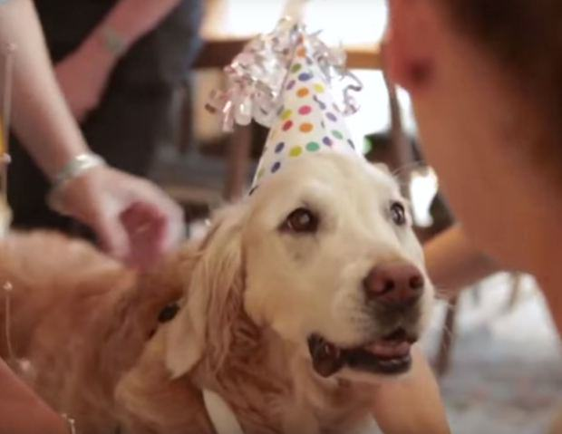 Last Surviving 9/11 Rescue Dog Has Awesome 16th Birthday UNILAD dog911 117