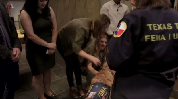 Last Surviving 9/11 Rescue Dog Has Awesome 16th Birthday UNILAD dog911 12