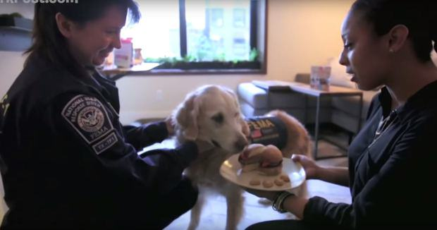 Last Surviving 9/11 Rescue Dog Has Awesome 16th Birthday UNILAD dog911 45