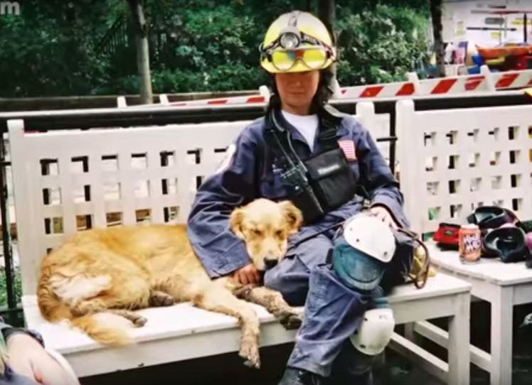 Last Surviving 9/11 Rescue Dog Has Awesome 16th Birthday UNILAD dog9117