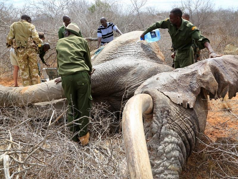 Elephants Wounded By Poison Arrows Seek Out Humans To Save Their Lives UNILAD ele26