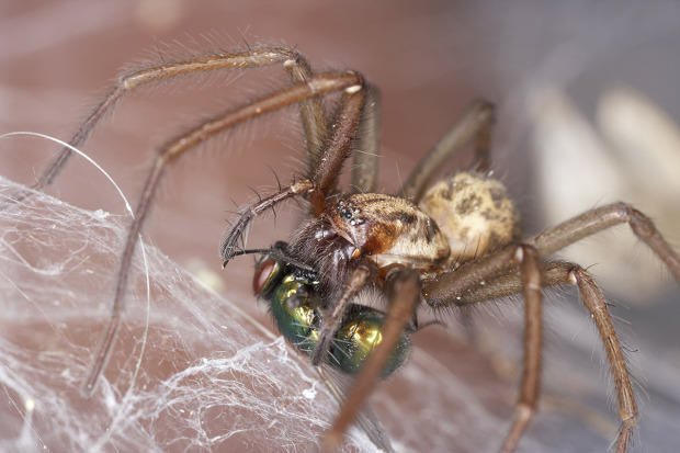 Ten Spiders Coming To Live With You This Autumn UNILAD giant house getty8