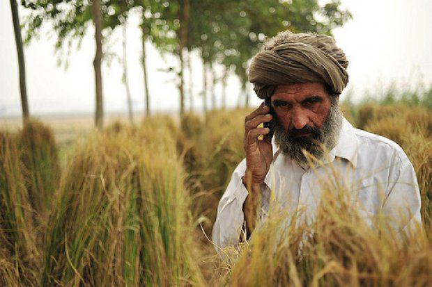 Man Pissing In A Field Gets His Dick Bitten By A Venomous Snake UNILAD indian phone farmer N. Palmer CIAT7