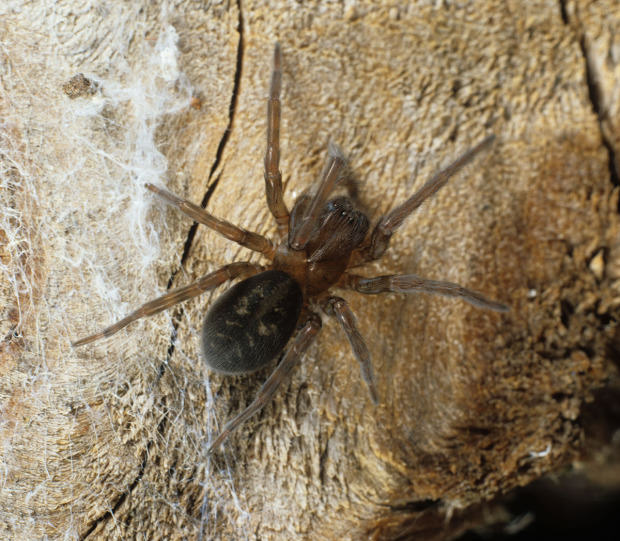 Ten Spiders Coming To Live With You This Autumn UNILAD lace web getty5