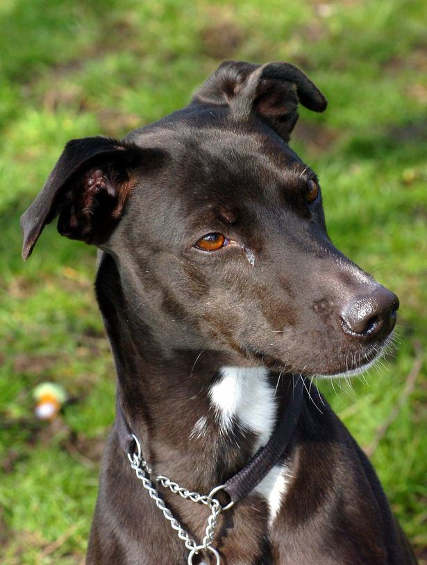 Britains Most Unloved Dog Gets Overwhelming Amount Of Offers For New Home UNILAD maggie dog 24