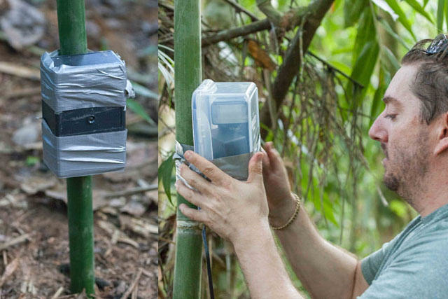 Guy Sets Up Camera Trap In Amazon Jungle And Snaps Rare Animals UNILAD rainforest animals 102