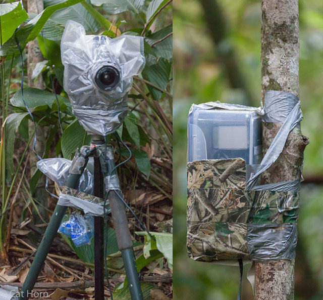 Guy Sets Up Camera Trap In Amazon Jungle And Snaps Rare Animals UNILAD rainforest animals 98