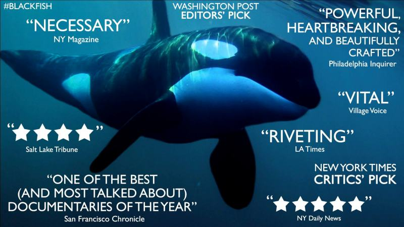 SeaWorld Confirms It Will No Longer Accept Whales Stolen From The Wild UNILAD seaworld 34