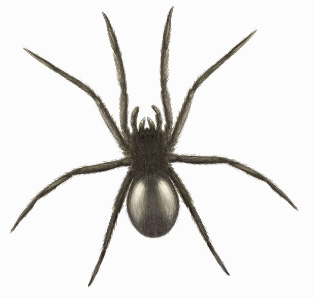 Ten Spiders Coming To Live With You This Autumn UNILAD tube web getty2