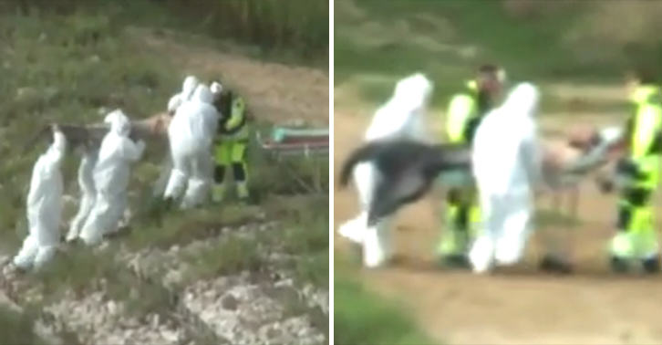 Footage Shows Men In Biohazard Suits Pulling Merman From Lake merman FB