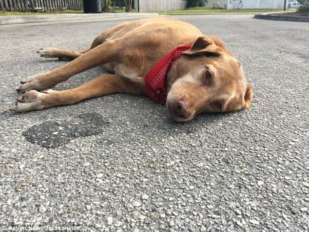 Loving Dog Found Lying In The Spot Owner Was Killed UNILAD 2DB7B7DC00000578 0 image a 21 144564111863691524