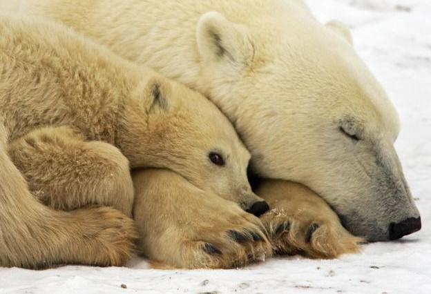UN Called After Conspiracy Theorist Claims Hes Found A Polar Bear On Mars UNILAD 86134416 gettyimages 7796009781283 624x426