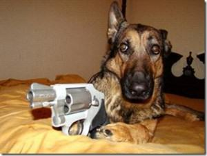 Dog Named Trigger Shoots Owner In The Foot UNILAD Dog with Gun 300x22671495