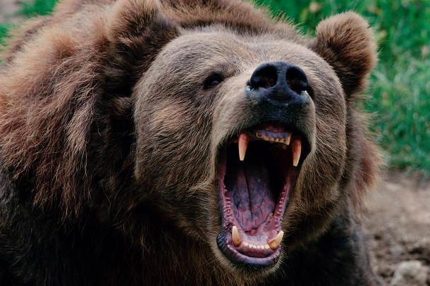 Man Survives Bear Attack By Forcing His Arm Down Its Throat UNILAD Screen Shot 2015 10 06 at 22.58.322