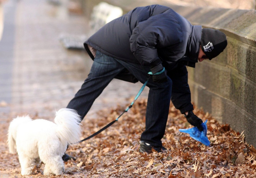 Dog Walkers Face Fines Of Up To £1000 For Not Carrying Plastic Bags UNILAD Screen Shot 2015 10 08 at 00.56.093