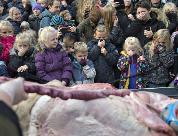 Lion Brutally Cut Open In Front Of Kids During Public Dissection At Zoo UNILAD The dissection of a lion at the zoo in Odense Denmark 412
