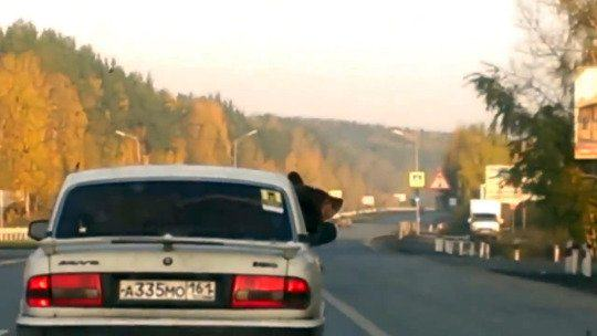 Driver With Bear In His Car Let Off By Police Because It Was Wearing Seatbelt UNILAD bear car 18