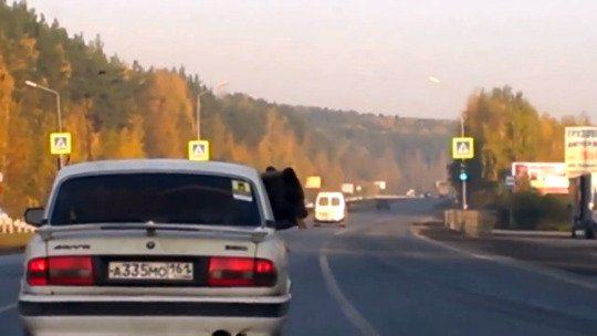 Driver With Bear In His Car Let Off By Police Because It Was Wearing Seatbelt UNILAD bear car 24