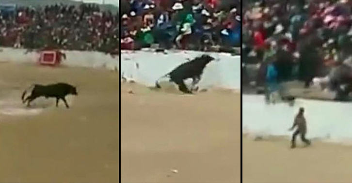 Terrifying Moment Four People Are Injured After Bull Jumps Into The Crowd UNILAD bull jump 4664522072