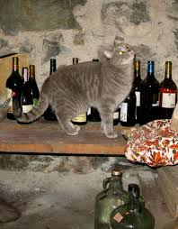 Cat Gets Pissed On Wine, Has Three Day Hangover UNILAD cat roo36238