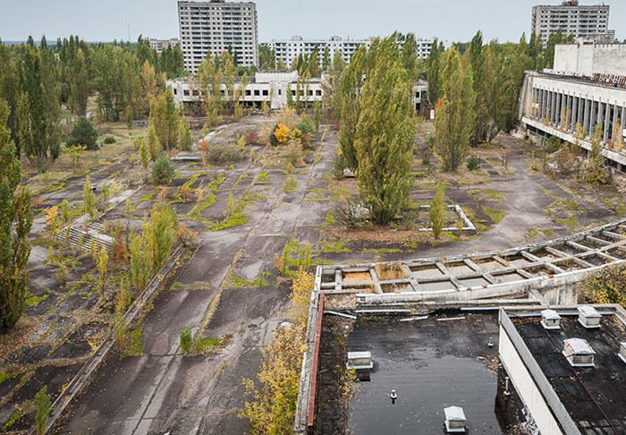 These Incredible Images Show Animals Thriving In Human Disaster Zones UNILAD chernobyl16