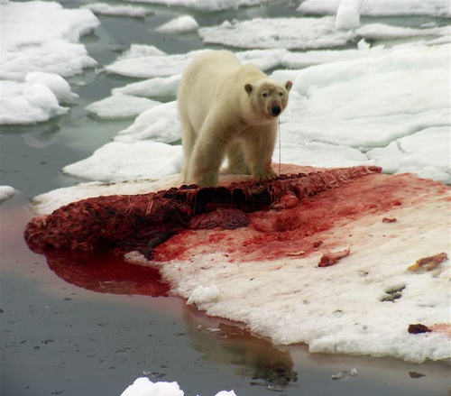 Heres What It Would Look Like To Be Eaten By A Polar Bear UNILAD eee2